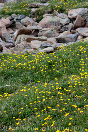 Alpine Flowers at Rock Cut